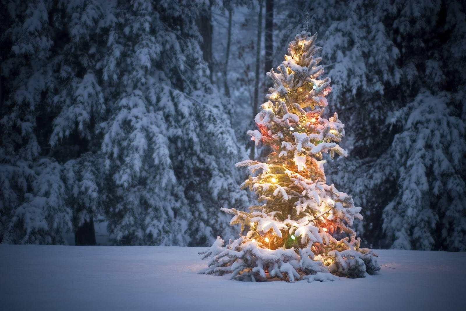 Auguri Di Natale In Dialetto Siciliano.Proverbi E Detti Popolari Del Mese Di Dicembre Meteo Life Una